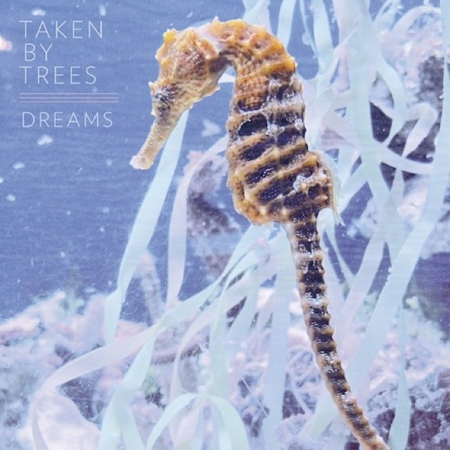 Taken-By-Trees-Dreams
