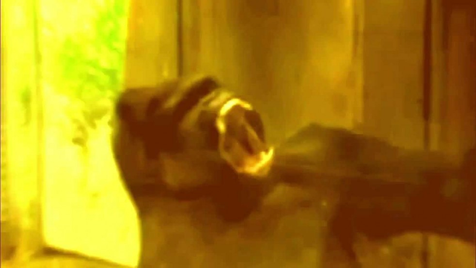 Video: Crushed Beaks - Tropes